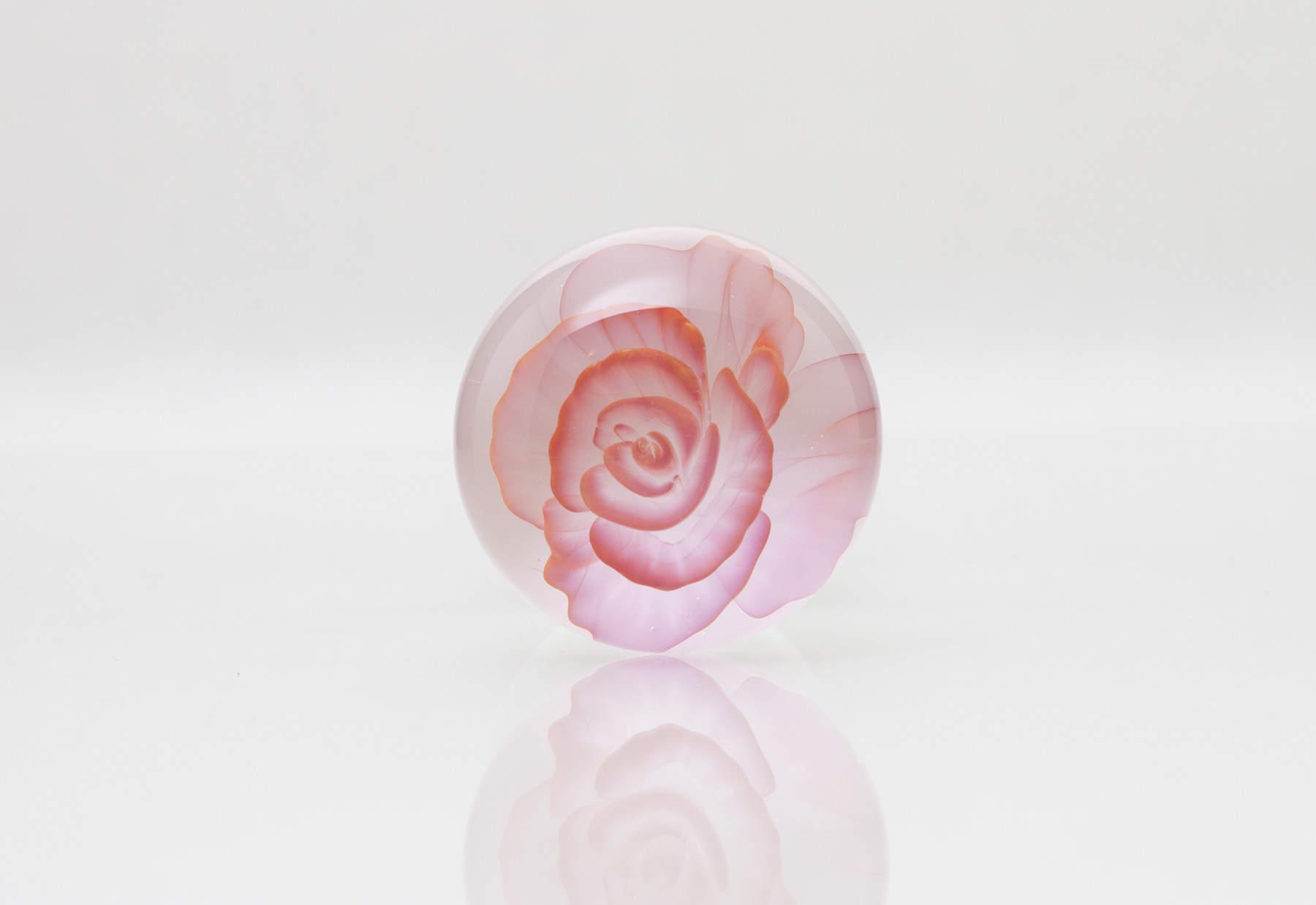 pink-rose-2
